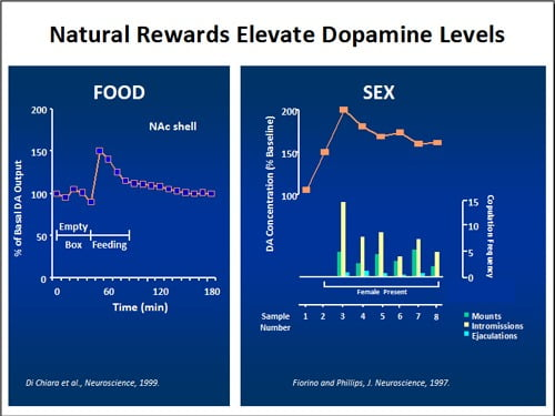 Nivelurile de dopamină ca răspuns la alimente și sex