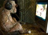monkey porn addiction